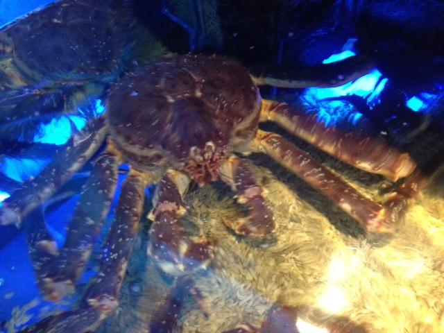crabTapei